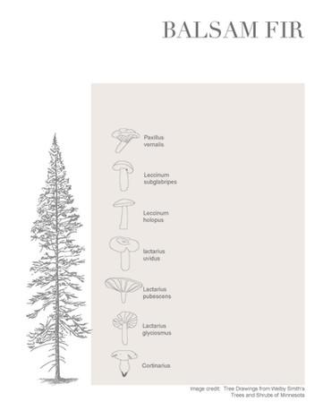 Tree-Fungi associations_Page_2.jpg