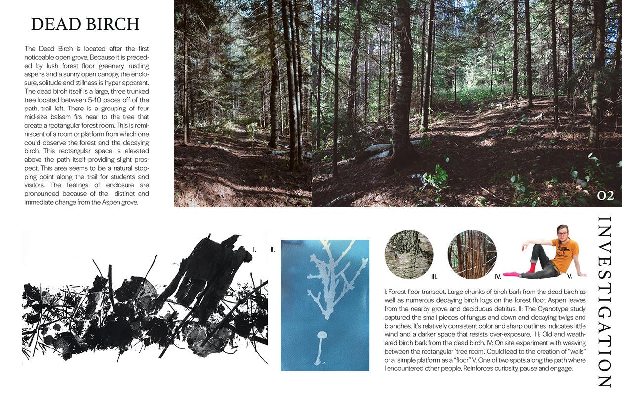 Dead Birch