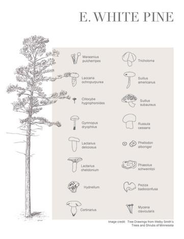 Tree-Fungi associations_Page_7.jpg
