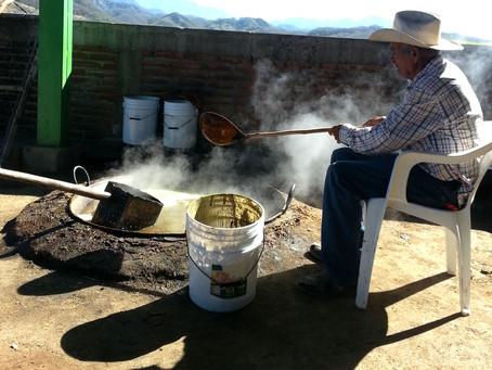 """""""Panocha"""" dulce de caña, tradición que perdura en Durango."""