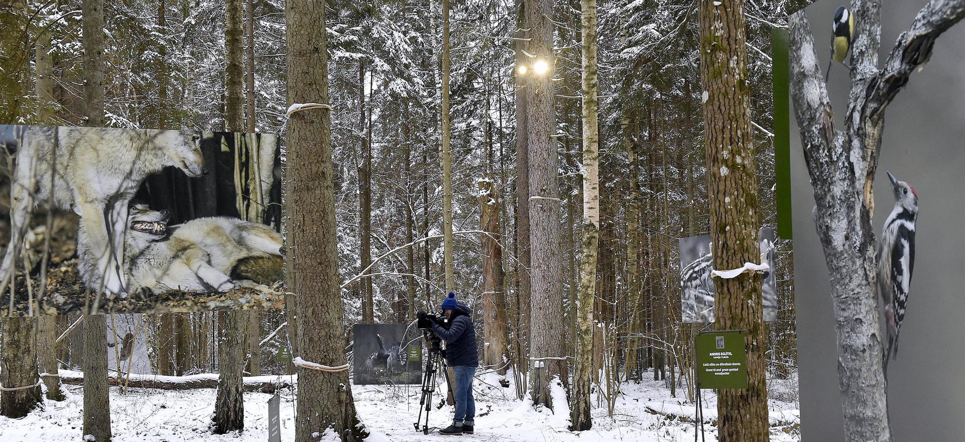 Mākslas taka ziemā