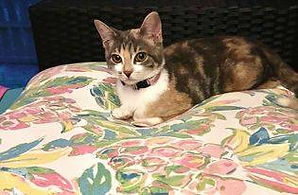 Kitty - spayed, playful, gets along with animals & kids