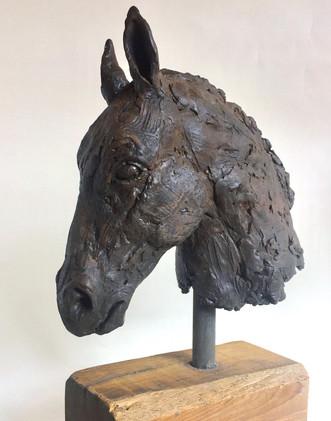 """Equus: the Close up"""