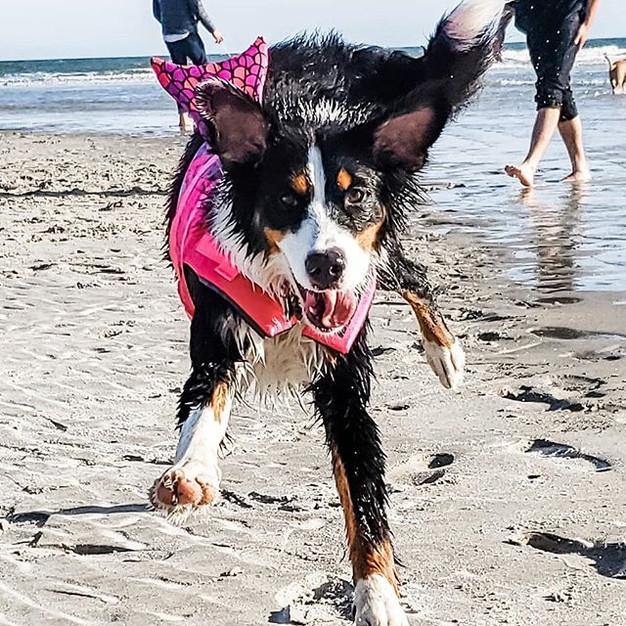 Pro Tip - Dog Life Jackets!