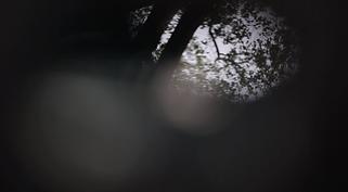Screen Shot 2021-01-18 at 2.57.56 PM.png