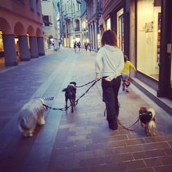 Via Nassa,cani e bimbi
