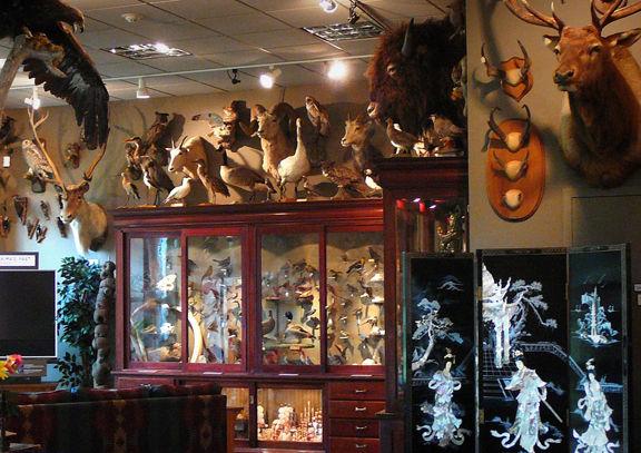 Cabinet of Curiosities 1.jpg