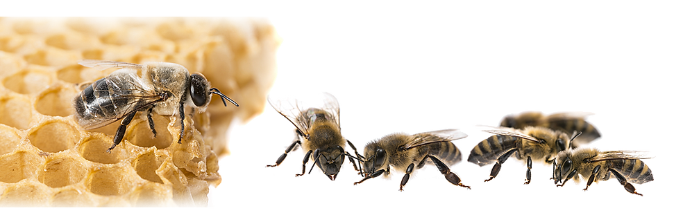 Multiple-bees.png