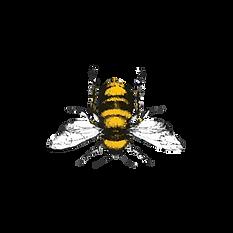 Bee-6-D.png