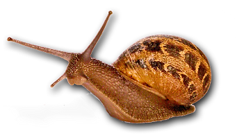 Camp-Snail.png
