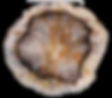 Petrified-Wood-1.png