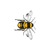 Bee-5-R.png
