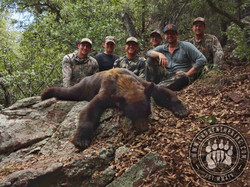 Arizona OTC rifle black bear 17