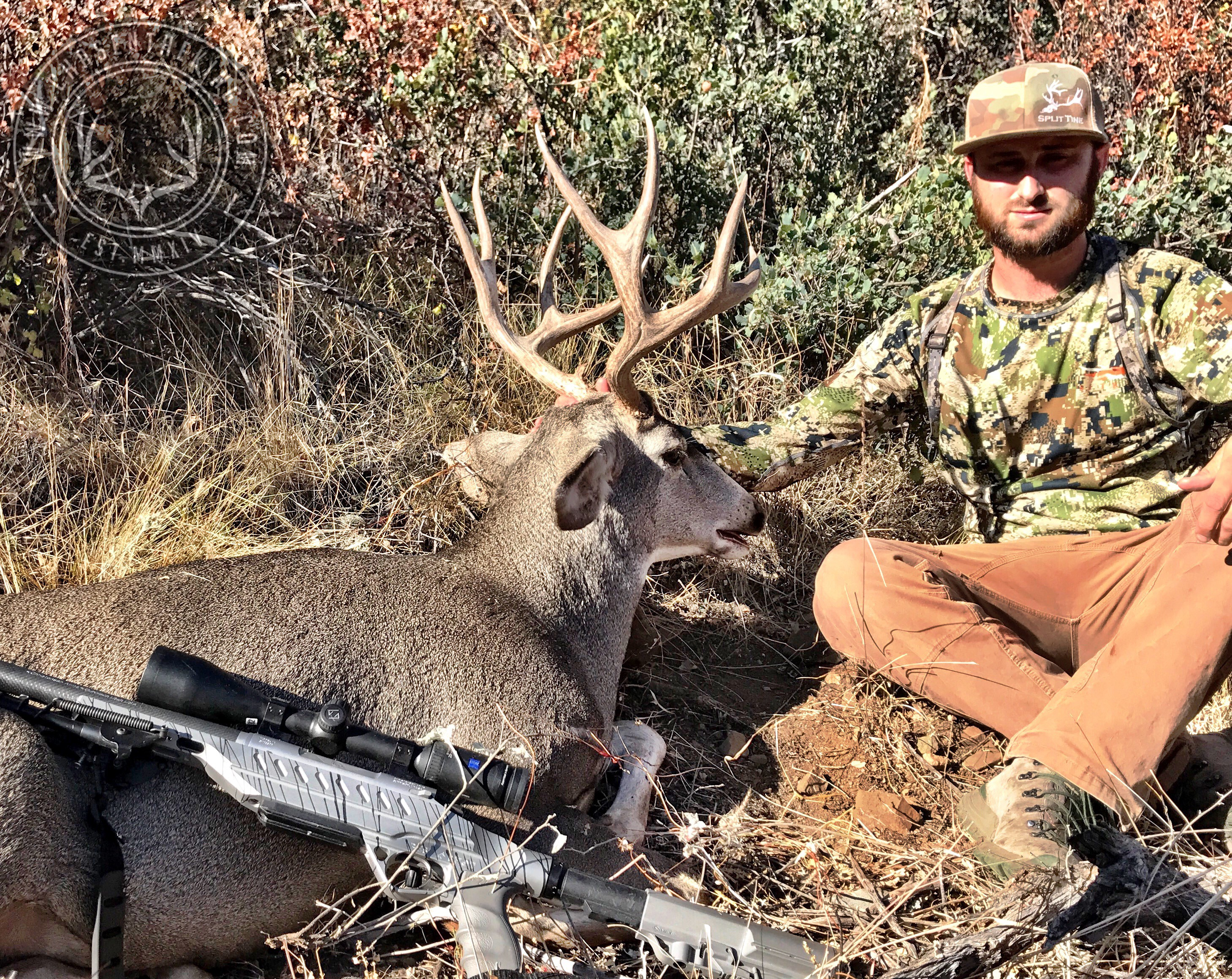 Arizona OTC archery mule deer 17