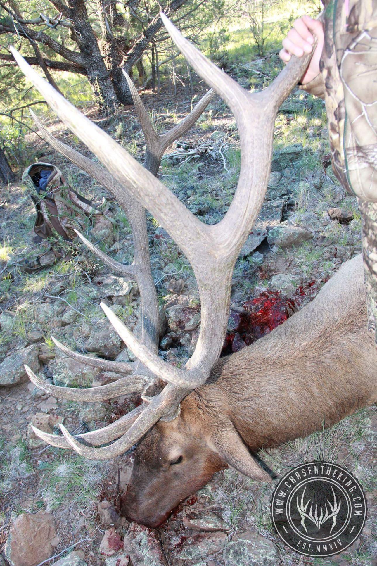 Unit 6A early archery bull elk 3
