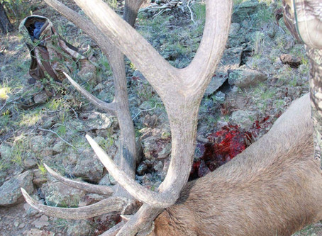 Understanding the Arizona Big Game Draw and Application Process