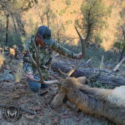 Unit 22S late season rifle bull elk 1