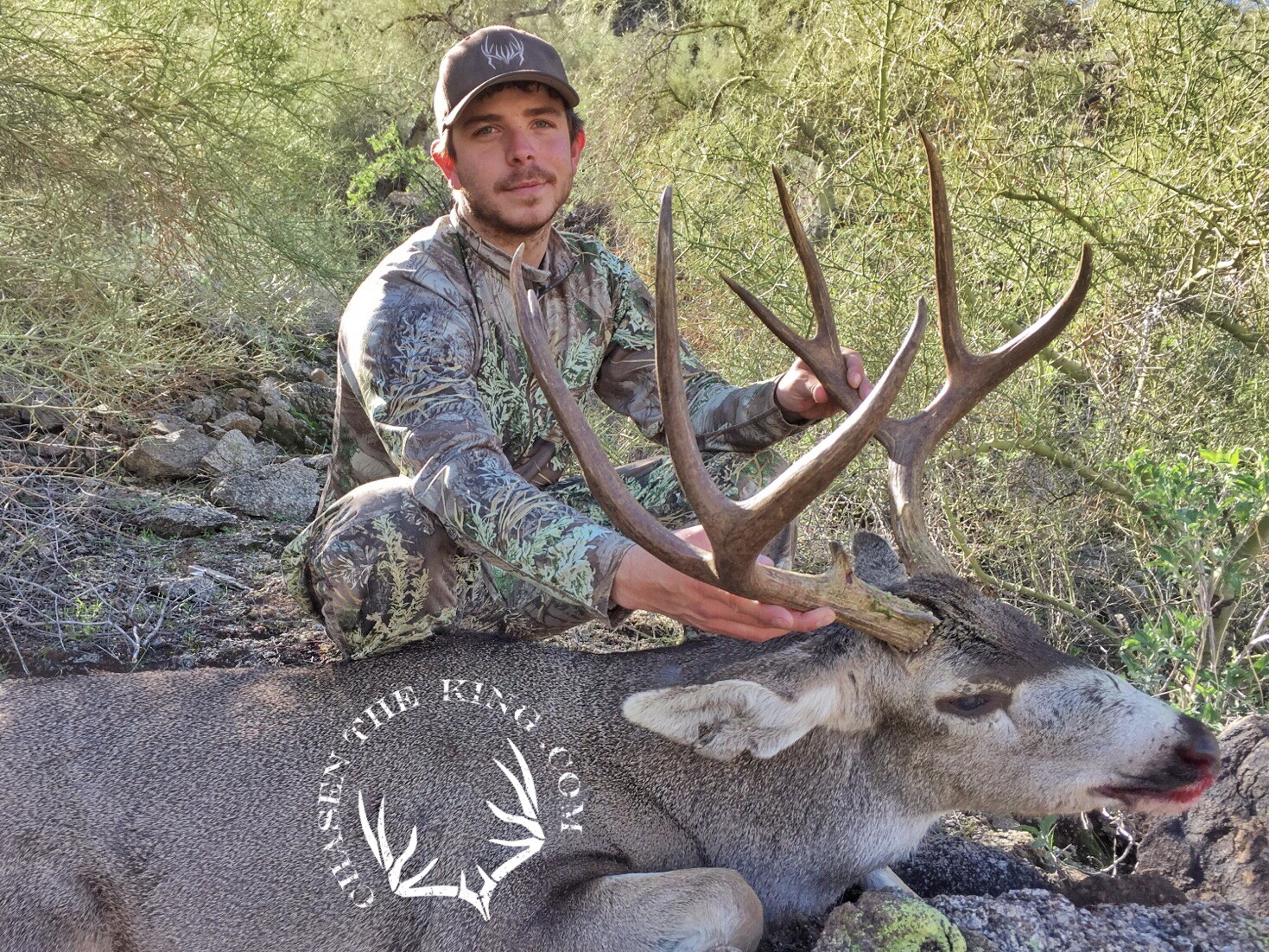 Arizona OTC archery mule deer 3