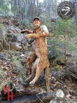 Arizona Dry Ground Mountain Lion 1