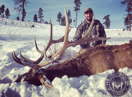 5A & 5B Late Rifle Bull Elk: Hunt Overview