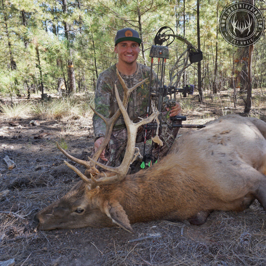 Unit 4B early archery bull elk 3