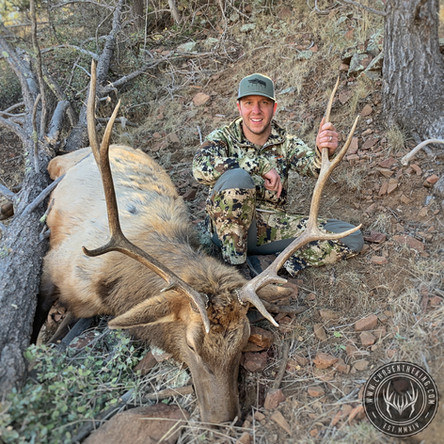 The Rocky Ascent: 22S Late Rifle Bull Elk
