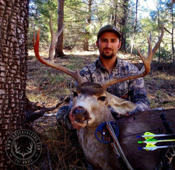 Arizona OTC archery mule deer 15