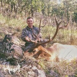 Unit 5A early archery bull elk 2