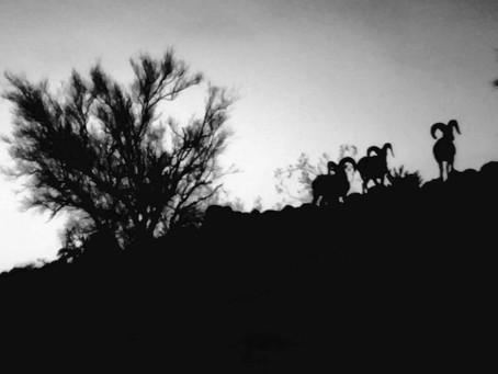 Reloader: Unit 41E Arizona Desert Bighorn Sheep Hunting Part 2