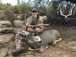 Arizona OTC archery mule deer 1