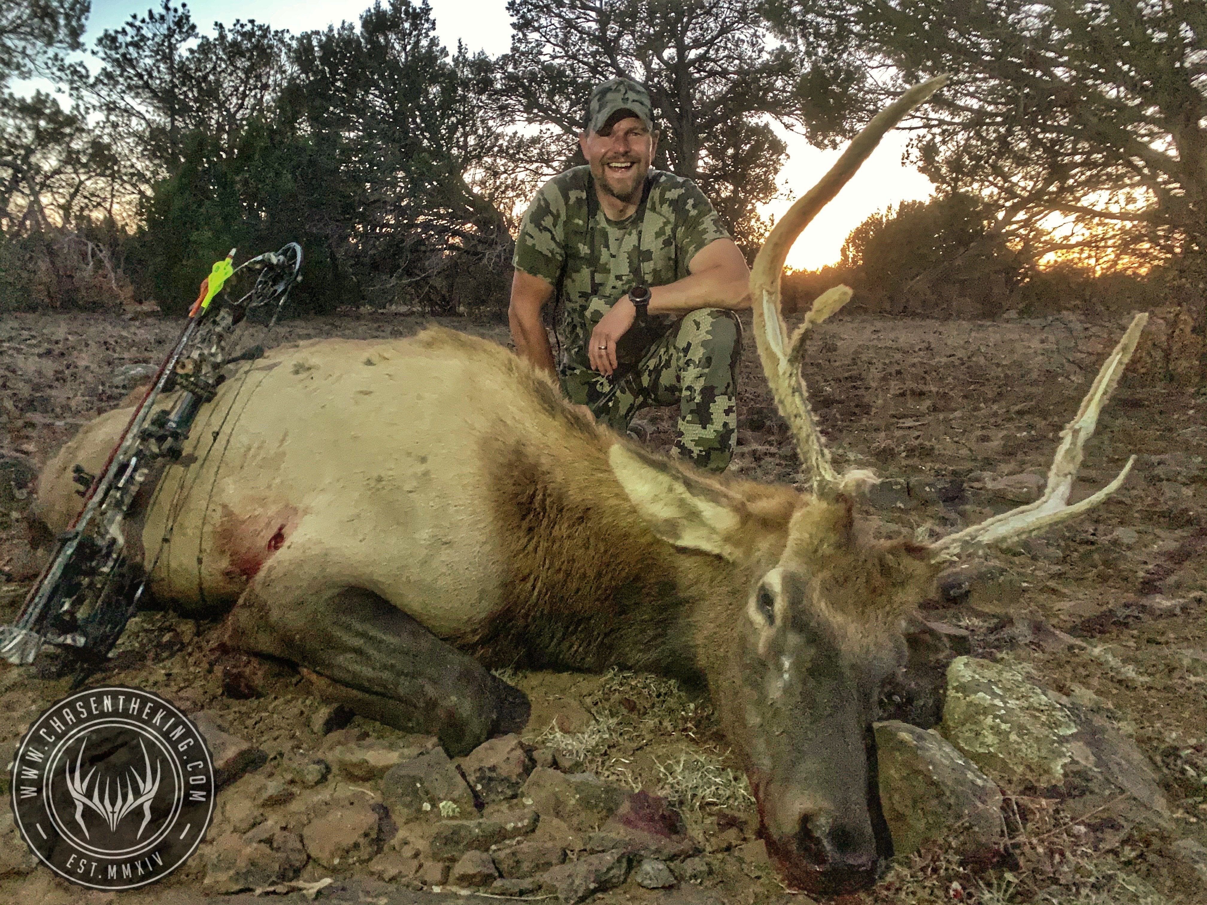 Unit 5B North early archery bull elk 3