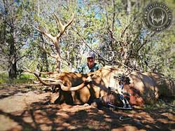 Unit 10 early archery bull elk