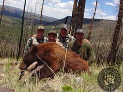 Arizona OTC rifle black bear 26