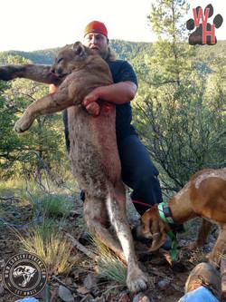 Arizona Dry Ground Mountain Lion 10
