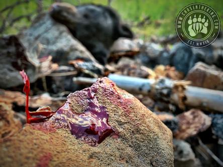 Ride the Lightning: OTC AZ Black Bear Hunt