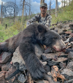 Arizona OTC rifle black bear 63