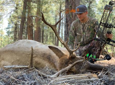 Like Father Like Son: 4B Archery Bull Elk