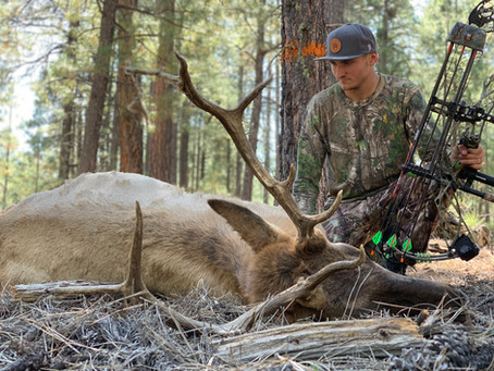 Like Father Like Son: 4B Archery Bull Elk