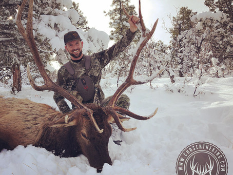Unit 8 Late Rifle Bull Elk: Hunt Overview