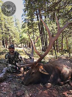 Unit 5A early archery bull elk 5