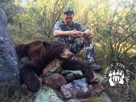 Monsoon Bears: Desert Bruins OTC AZ Black Bear