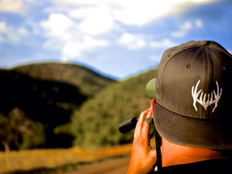 Arizona Black Bears: OTC Hunts
