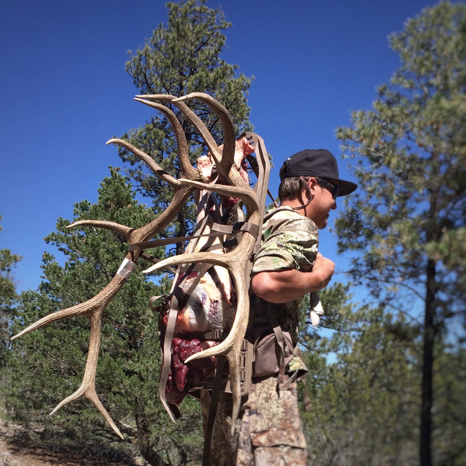 Unit 7 West early archery bull elk 2