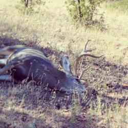 Unit 23 general rifle mule deer 3