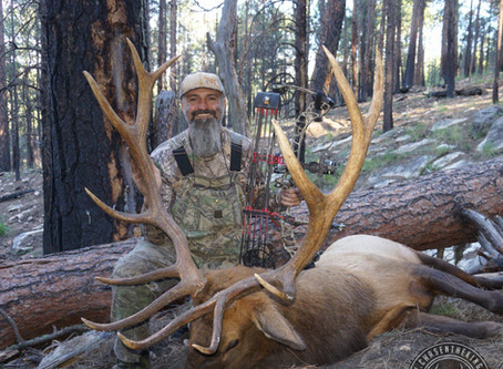 Arizona Elk Hunt Draw: What Units Should I Apply For?