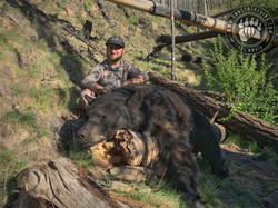 Arizona OTC rifle black bear 58