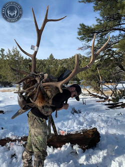 Unit 8 late season rifle bull elk 6