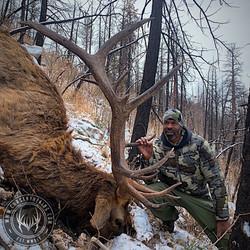 Unit 5A late season rifle bull elk 6