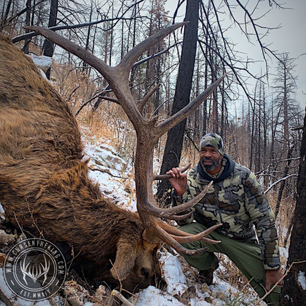 Winter Warrior: 5A Late Rifle Bull Elk
