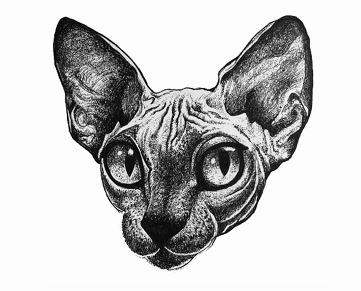 Lost in a Cats Eyes.jpg